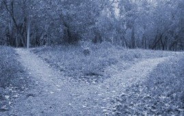 A path forks into two in a woodland